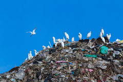 Bird on mountain of garbage Royalty Free Stock Photography