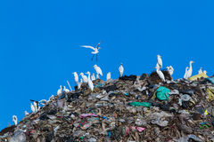 Bird on mountain of garbage Stock Photo