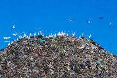 Bird on mountain of garbage Stock Image
