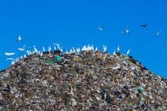 Bird on mountain of garbage Stock Image