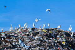 Bird on mountain of garbage Stock Images