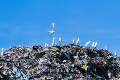 Bird on mountain of garbage Royalty Free Stock Photos
