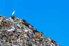 Bird on mountain of garbage Royalty Free Stock Photos