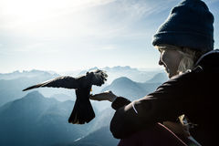 Bird in the mountains Stock Image