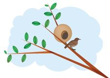 Bird and mud nest on a tree Stock Images