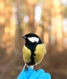 Bird on my hand Stock Photo