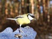 Bird on my hand Royalty Free Stock Photos