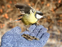 Bird on my hand Royalty Free Stock Photo