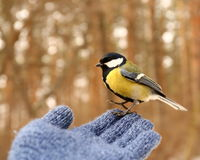 Bird on my hand Stock Image