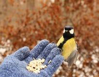 Bird on my hand Stock Photography
