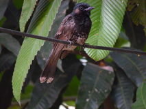 Bird. A naturally buatifull bird Stock Photo