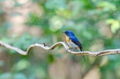Bird in Nature royalty free stock images