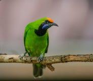 Bird in nature Stock Photos