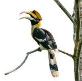 Bird in nature Stock Image