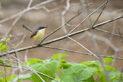 Bird. Nature leaves green wildlife birdphotography royalty free stock photography