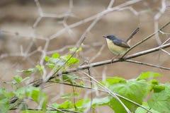 Bird. Nature leaves green wildlife birdphotography stock photography