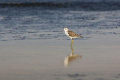 The bird in nature. Royalty Free Stock Images