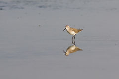 The bird in nature. Stock Photo