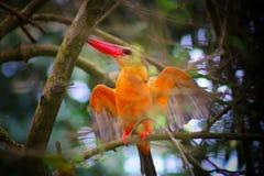 Bird stock images