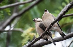 Bird, nature, wildlife, two little birds on branch , they are si stock photo