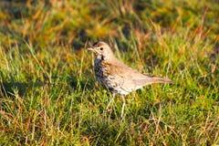 A bird near Lake Tekapo, New Zealand royalty free stock photo