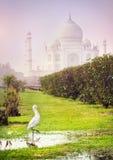 Bird near Taj Mahal Royalty Free Stock Photography