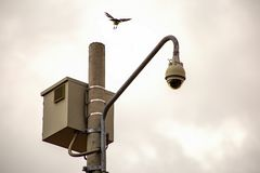A bird near to land on a post with a security camera royalty free stock photos