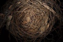 Bird nest. Empty bird nest with black backgroung Stock Photo