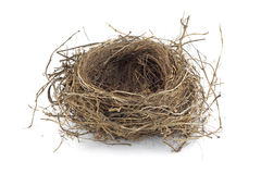 Free Bird Nest Royalty Free Stock Photography - 10969587