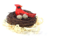 Bird in nest Royalty Free Stock Photos