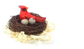 Bird in nest. A bird in a nest royalty free stock photos