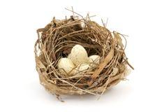 Bird nest. Small bird nest with eggs on white background stock image