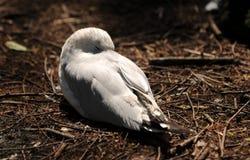 Bird in a nest Stock Photos