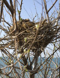 Bird nest. On tree in front of the sea royalty free stock photo