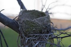 Bird Nest. Picture of an empty bird nest in fall Stock Image