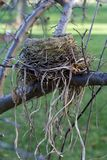 Bird Nest. Picture of an empty bird nest in fall Stock Photo