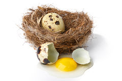 Bird nest Royalty Free Stock Photos