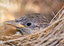 Bird in nest Stock Photos