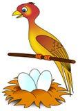 Bird and nest Stock Photography