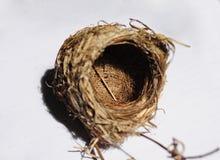Bird nest Royalty Free Stock Photos
