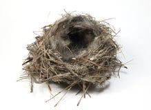 Bird nest. Natural bird nest isolated on white stock photo