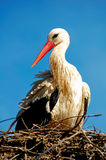 Bird in nest. A big white bird in his nest at Jerez de la Frontera Zoo, Cadiz, Spain Stock Photo