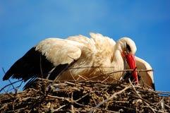 Bird in nest. A big white bird in his nest at Jerez de la Frontera Zoo, Cadiz, Spain Stock Image