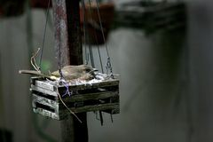 Bird in nest Royalty Free Stock Photos