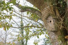 Bird Nest Box in the Forest stock photos