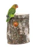 Bird nest box and lovebird royalty free stock photos