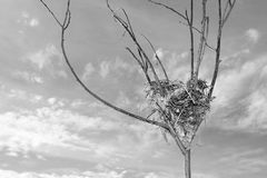 Bird Nest. In a branch against a cloudy sky Royalty Free Stock Images