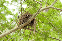 Bird Nest. On a branch of a tree in garden Royalty Free Stock Images
