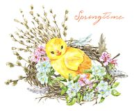 Bird nest with chicken, willow branches, blooming apple stock photo