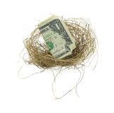 Bird nest with dollar bill Royalty Free Stock Image